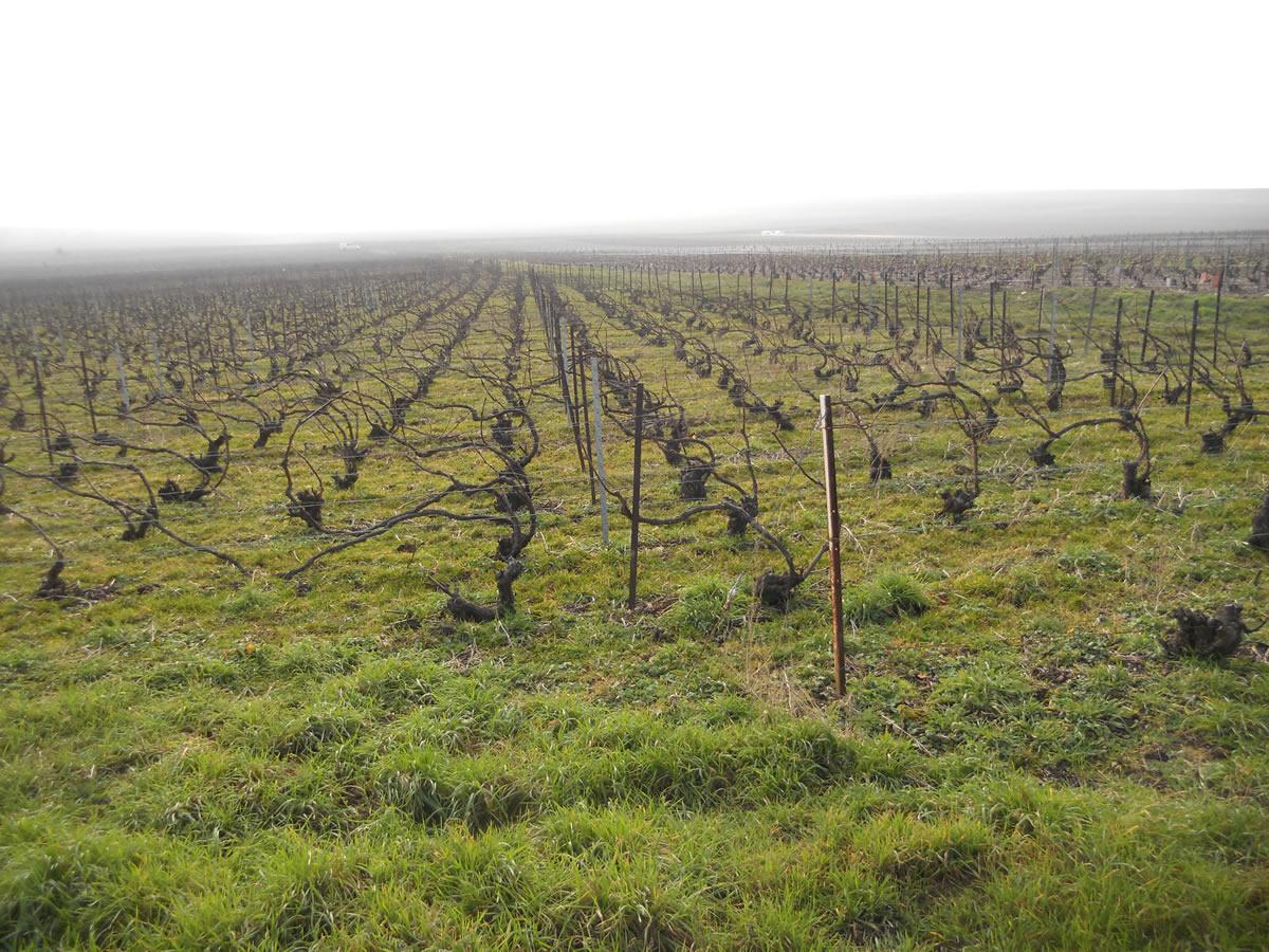 Wine climate change